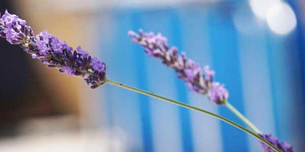 Ferien-Kreta (7)